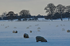 Severe Weather Conditions – Advice for Farmers from www.winterready.ie