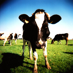 Changing Times for Dairy & Beef Farmers